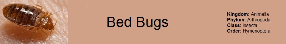 Bed Bug 960 x 150