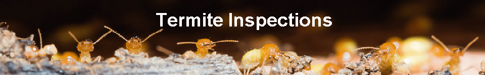 Termite Inspection Thin with text