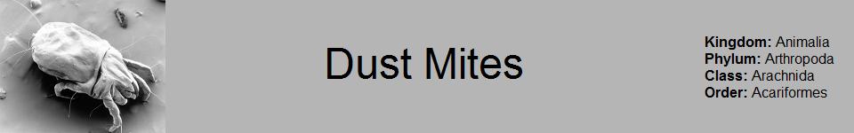 Dust Mite 960 x 150