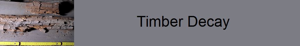 Timber Decay 960 x 150