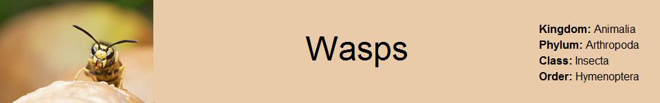 Wasp 960 x 150