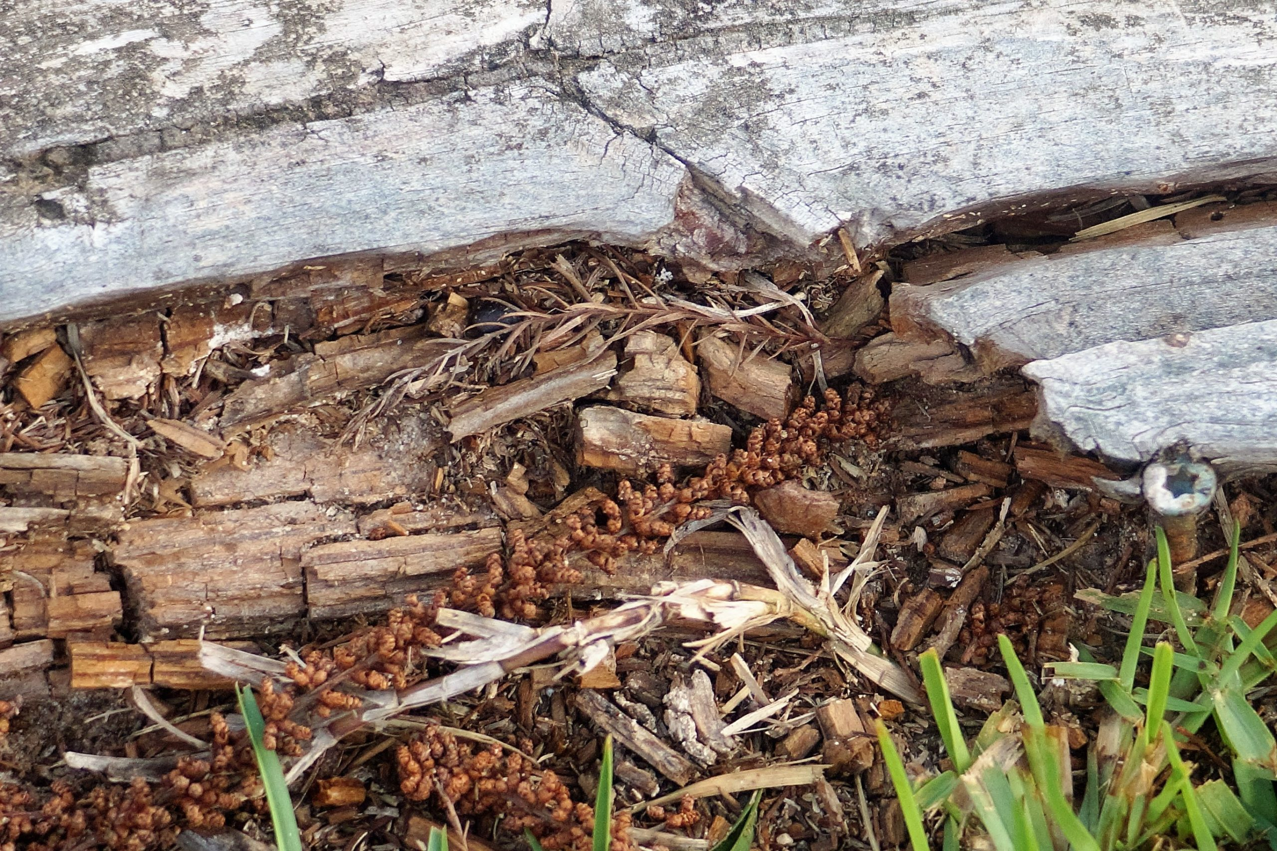 damage done by termites